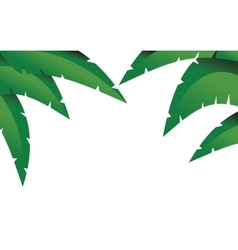 Palm branches vector image vector image