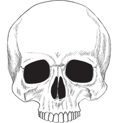 Human skull isolated vector