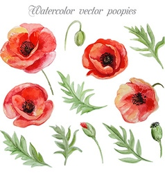 Set of red watercolor poppy flowers vector