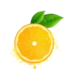 orange slice with leaves and watercolor vector image