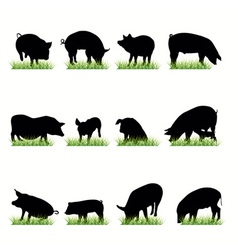 pigs vector image vector image
