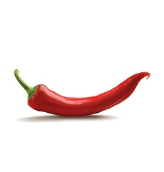 red hot chili pepper vector image
