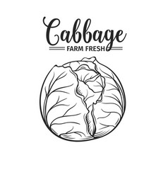 hand drawn cabbage icon vector image
