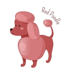 Red poodle isolated Child fun pattern icon vector image
