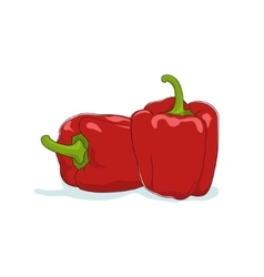 Red bell pepper isolated on white vector