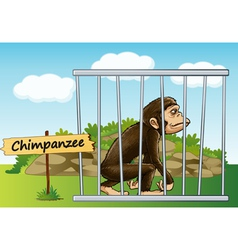 Cartoon zoo chimpanzee vector