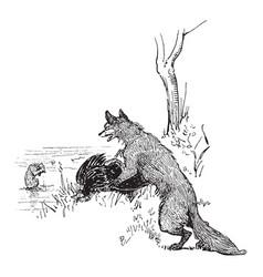Reynard the fox taunting bruin vintage vector