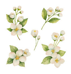 Watercolor set of flowers and branches jasmine vector