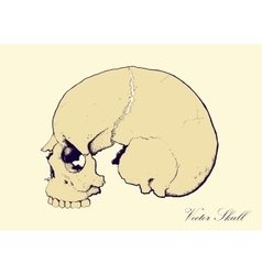 Retro Skull Profile vector image