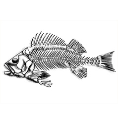 black fish skeleton vector image