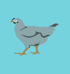in flat style hen vector image vector image