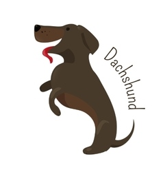 Dachshund isolated child fun pattern icon vector