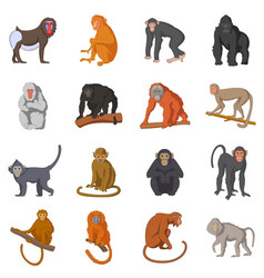 different monkeys icons set cartoon style vector image vector image
