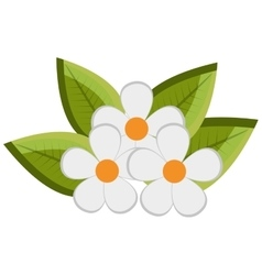 white flowers and green tree leaves graphic vector image