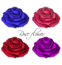 Outlined blooming colored rose flowers vector