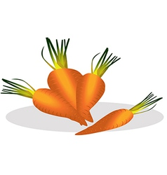 Carrot vector image