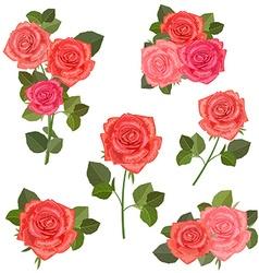 collection bouquets of roses for your design vector image