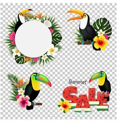 toucans set vector image vector image