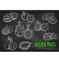 Exotic fruits chalk sketches on blackboard vector
