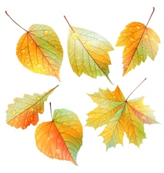 Set of colorful autumn leaves vector image vector image