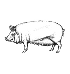 Pig in hand drawn style vector