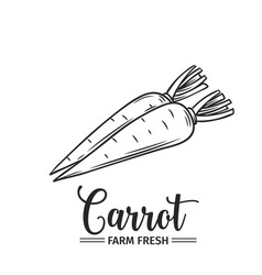 hand drawn carrot icon vector image vector image