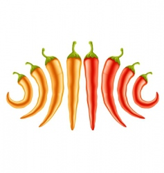 hot red and yellow peppers vector image vector image