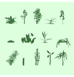 Silhouettes plants vector