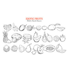 monochrome exotic and tropical fruits collection vector image vector image
