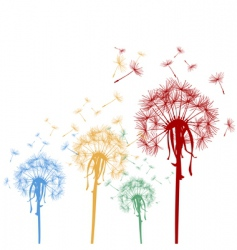 Colored dandelions vector