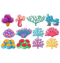 Different type of coral reef vector