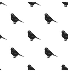 Bullfinch icon in black style isolated on white vector