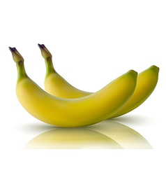 bananas with reflection vector image vector image