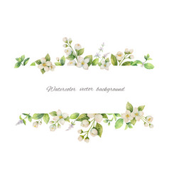 Watercolor banner of flowers jasmine and vector