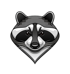 Cartoon wild raccoon animal mascot vector