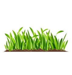 Green grass isolated vector image vector image