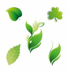 Set of Green Leaves Floral Leaf Element vector image