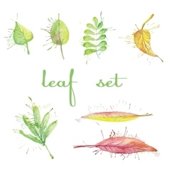 Set of different watercolor leaves vector