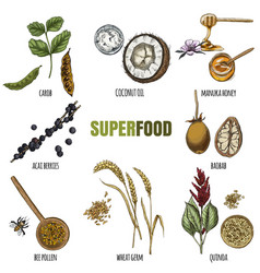 superfood set full color realistic sketch vector image vector image