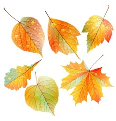 Set of colorful autumn leaves vector
