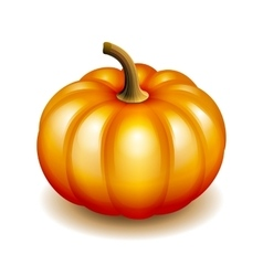 Orange autumn pumpkin icon vector