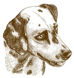 Engraving dalmatian head vector