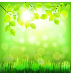 Summer nature background with green foliage vector
