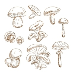Autumnal forest mushrooms sketches set vector