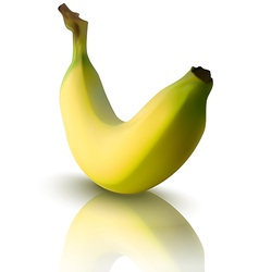 Banana with reflection vector