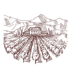 Hand drawn of a vineyard vector