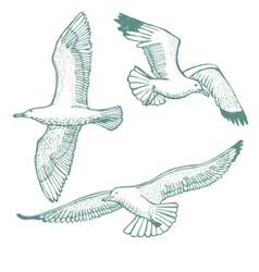 Hand-drawn set of seagulls vector