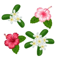 Set of tropical flowers hibiscus and plumeria vector