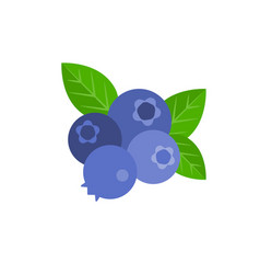 Bunch of blueberry vector