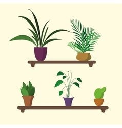 houseplants on shelf in flat design vector image vector image